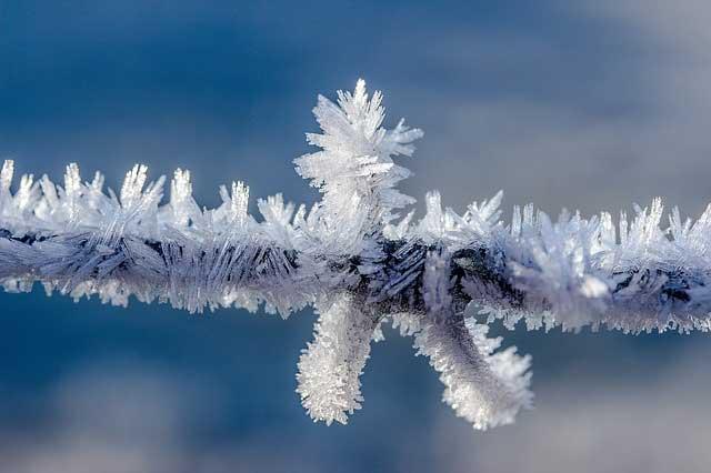 Winter Wellness Tag