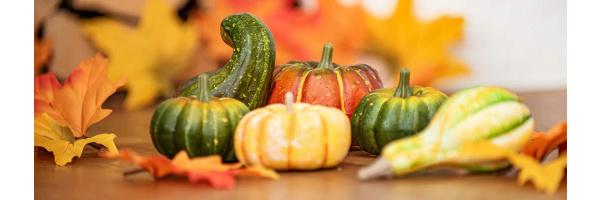 Herbst & Halloween