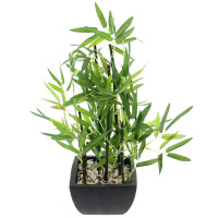 Deko-Bambus im Topf