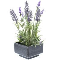 Deko-Lavendel im Topf