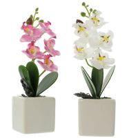 Deko-Orchidee im Topf 2er Set